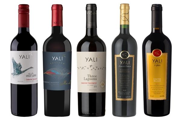 칠레의 깨끗한 자연을 담은 와인, 지구를 생각하는 친환경 와이너리 '얄리'