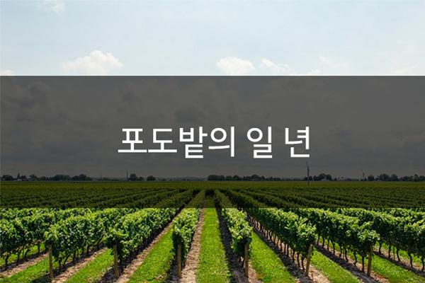 [와인상식] 월별 포도밭 관리법