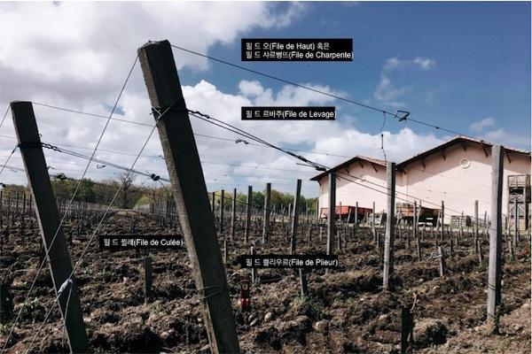 보르도, 마고 포도밭 생존일지 – 1. 포도밭 설치