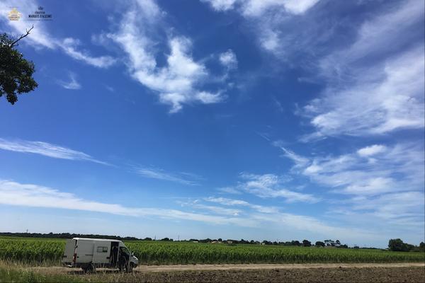 보르도, 마고 포도밭 생존일지 – 4. 흘르바주(Relevage, 케이블 들어 올려 고정하기)