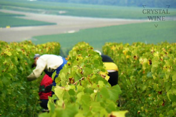 유기농 샴페인의 선두주자, 로랑 베나르(Laurent Benard) 출시