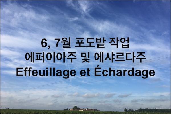 보르도, 마고 포도밭 생존일지 – 5. 잎 제거 작업, 에퍼이아주(Effeuillage)와 에샤르다주(Echardage)