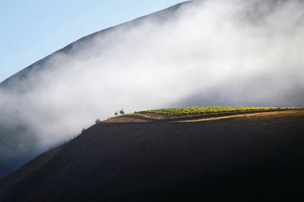 캘리포니아 와인의 반전매력, 비엔 나시도 & 솔로몬 힐스