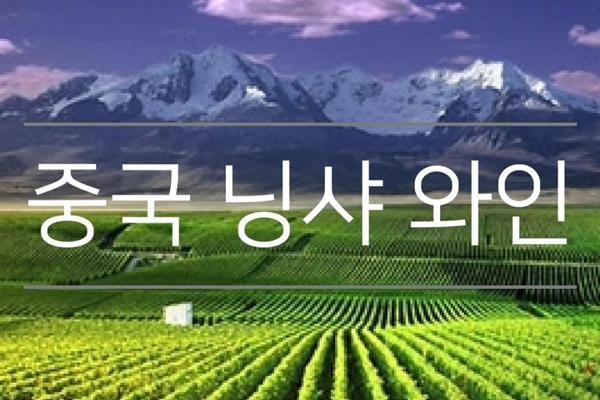 중국 닝샤 와인의 세계