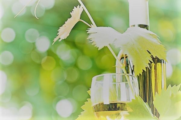 와인21 검색기준 소비뇽 블랑으로 만든 화이트 와인 TOP10
